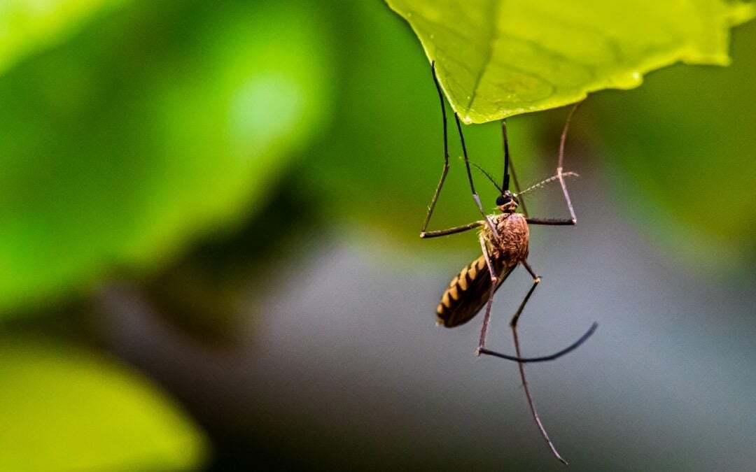 Malaria: una malattia che può spaventare…